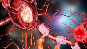 Human Nervous System | Neurons | Nerve Impulse | Synapse