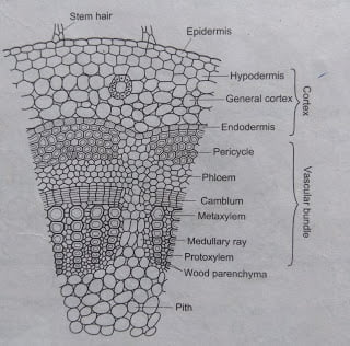 Plant tissue: structure, types, function