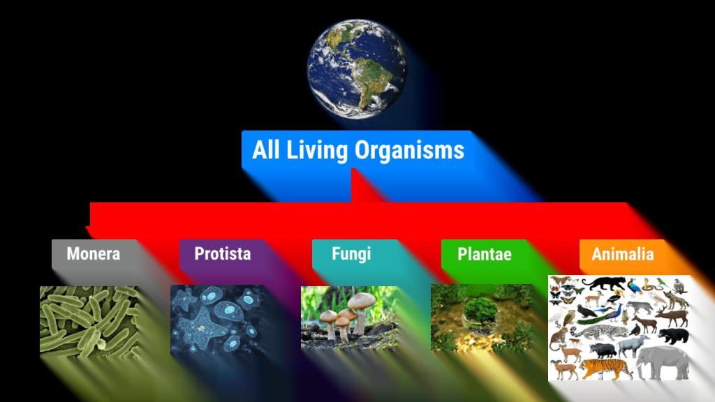 Biological Classification System Five Kingdom