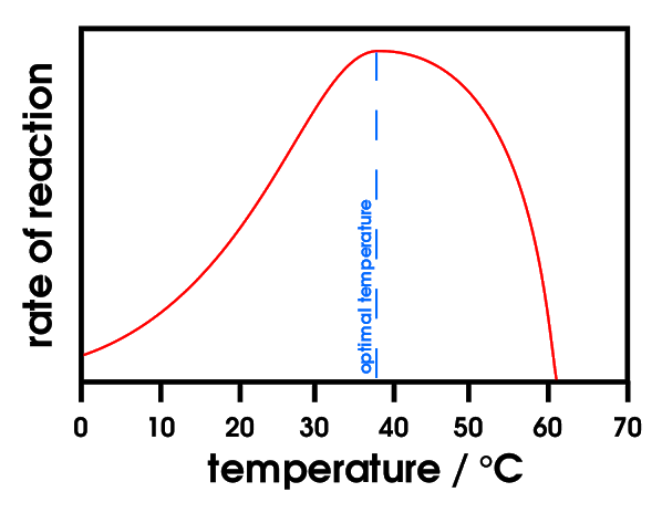 Effect of Temperature on Enzymes Activity